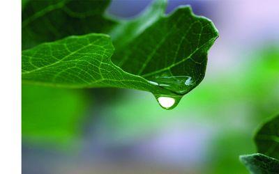 Umweltverträglichkeitsprüfung UVP-Richtlinie