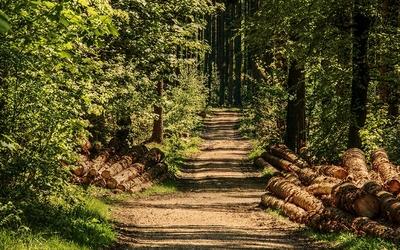 Zahlen und Fakten zur Forstwirtschaft